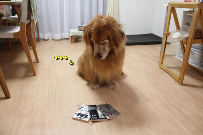 さくらんぼ文庫本 060