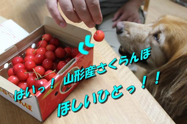 さくらんぼ文庫本 003