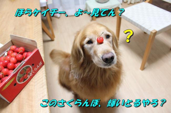 さくらんぼ文庫本 010