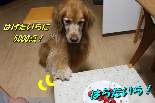 さくらんぼ文庫本 020