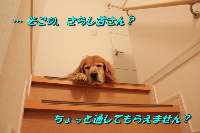 階段JAF 005