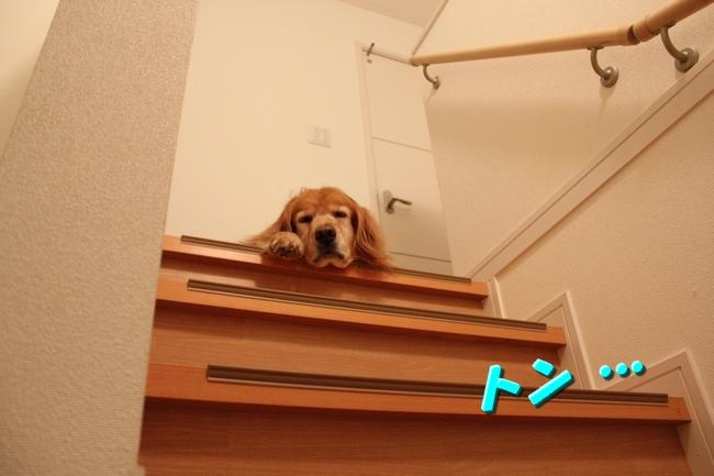 階段JAF 008