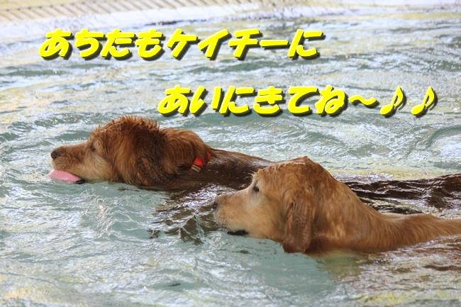 伝ちゃんとプール 064