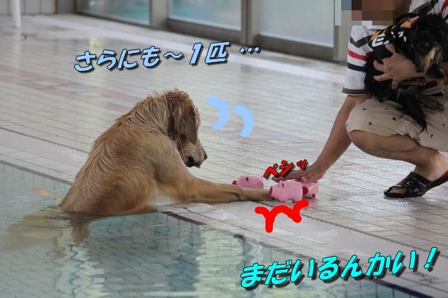 伝ちゃんとプール 259