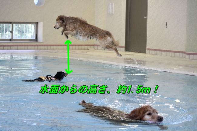 伝ちゃんとプール 044