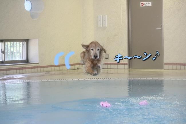 伝ちゃんとプール 146