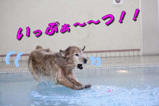 伝ちゃんとプール 206