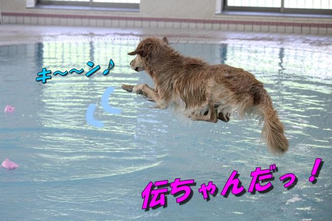 伝ちゃんとプール 255