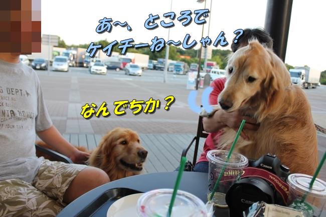 伝ちゃんとプール 446