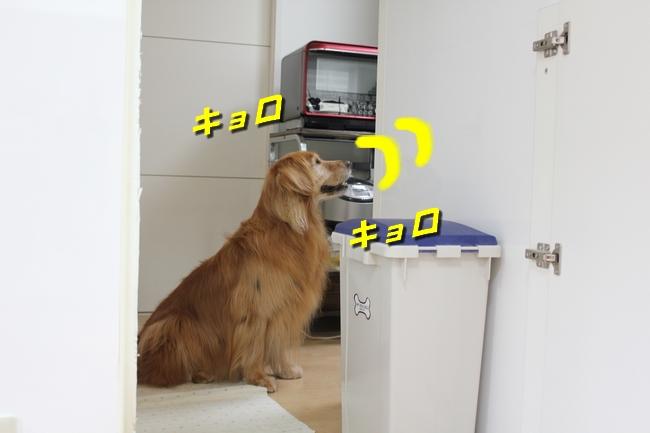 キッチン覗き 013