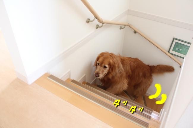 チェア階段 004