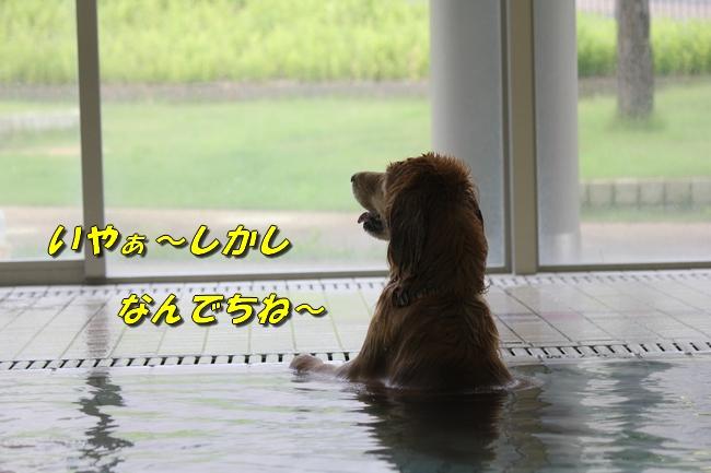 ティアナちゃんハスキー犬やくもちゃんつぶちゃん 409