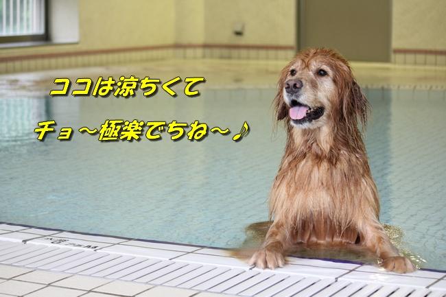 ティアナちゃんハスキー犬やくもちゃんつぶちゃん 426