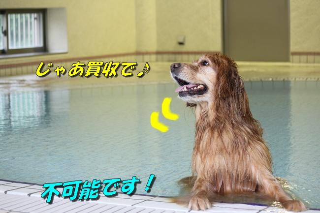 ティアナちゃんハスキー犬やくもちゃんつぶちゃん 428