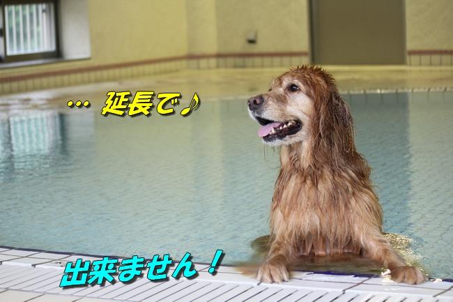 ティアナちゃんハスキー犬やくもちゃんつぶちゃん 429