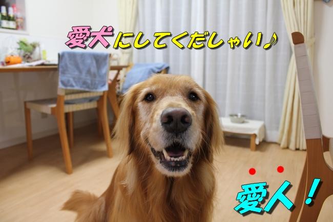 五郎丸インタビュー 011