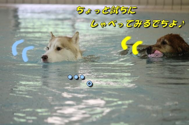 ティアナちゃんハスキー犬やくもちゃんつぶちゃん 036