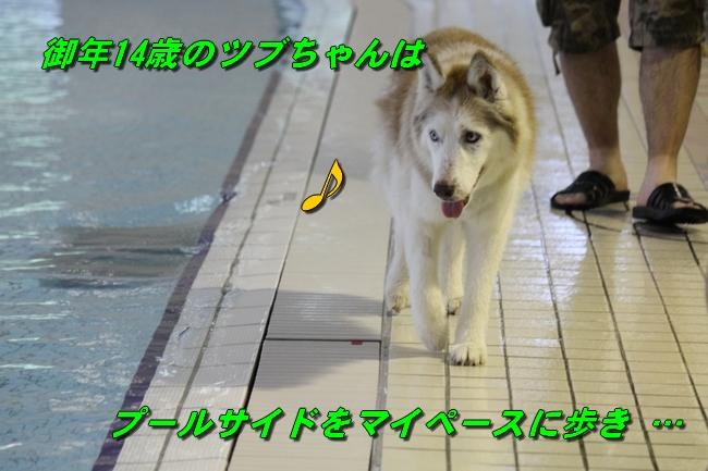 ティアナちゃんハスキー犬やくもちゃんつぶちゃん 039