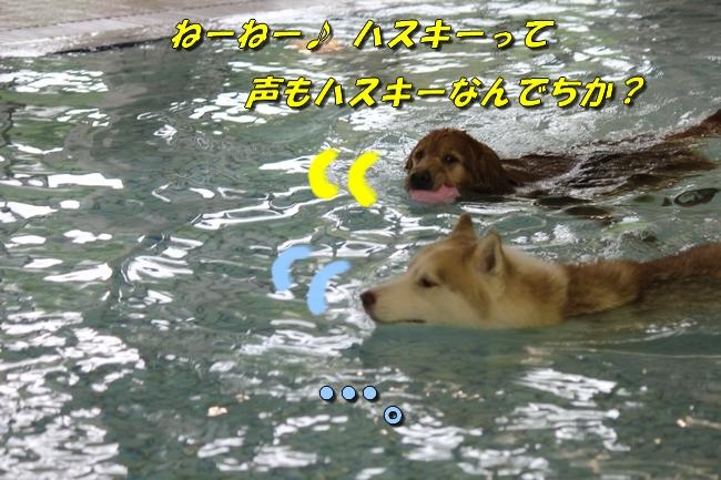 ティアナちゃんハスキー犬やくもちゃんつぶちゃん 058