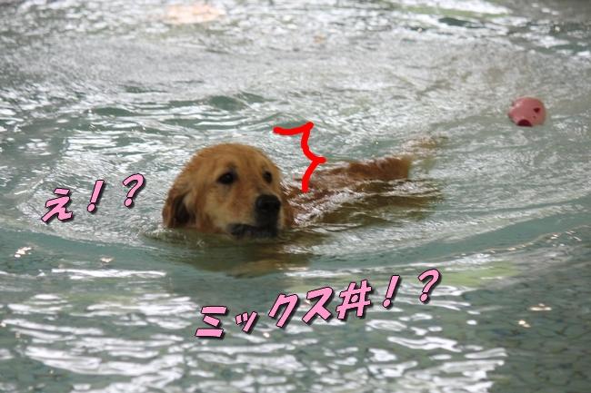 ティアナちゃんハスキー犬やくもちゃんつぶちゃん 060