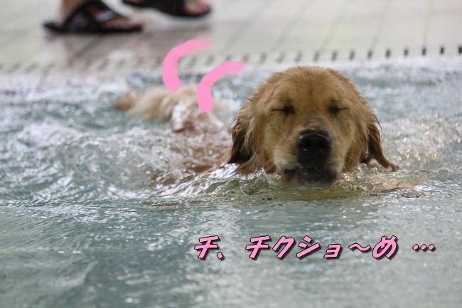 ティアナちゃんハスキー犬やくもちゃんつぶちゃん 068