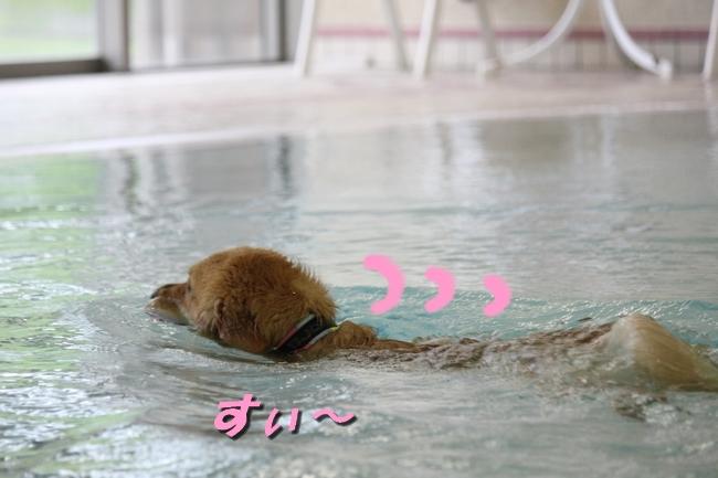 ティアナちゃんハスキー犬やくもちゃんつぶちゃん 097