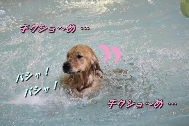 ティアナちゃんハスキー犬やくもちゃんつぶちゃん 269