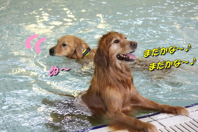 ティアナちゃんハスキー犬やくもちゃんつぶちゃん 279