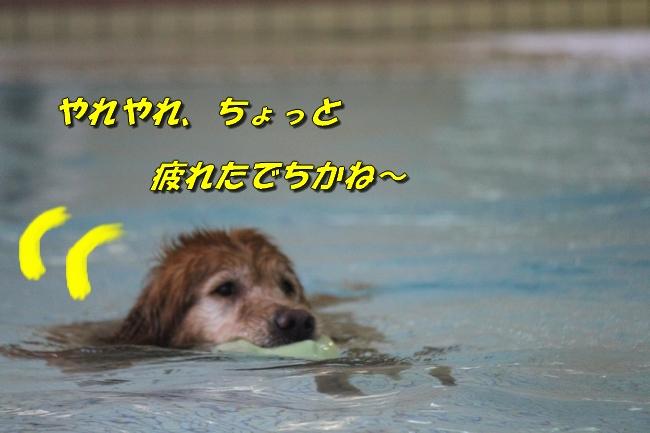 ティアナちゃんハスキー犬やくもちゃんつぶちゃん 323