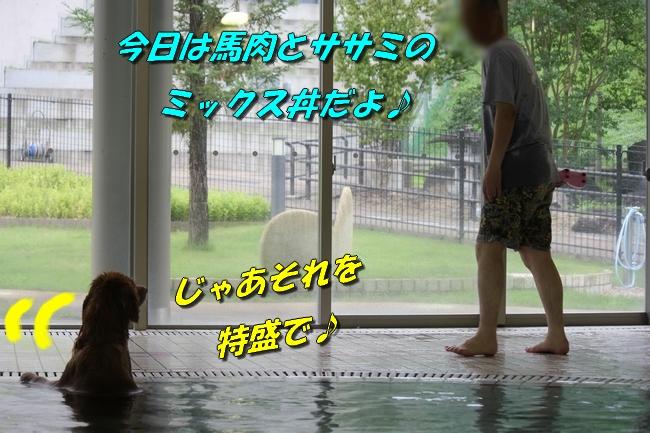 ティアナちゃんハスキー犬やくもちゃんつぶちゃん 407