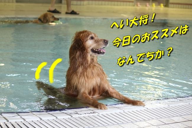 ティアナちゃんハスキー犬やくもちゃんつぶちゃん 413