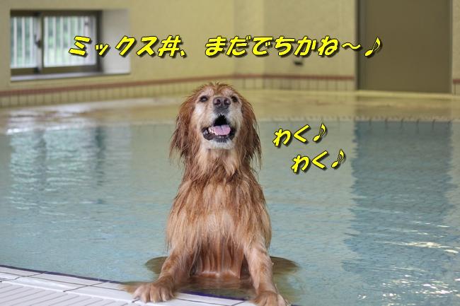 ティアナちゃんハスキー犬やくもちゃんつぶちゃん 419