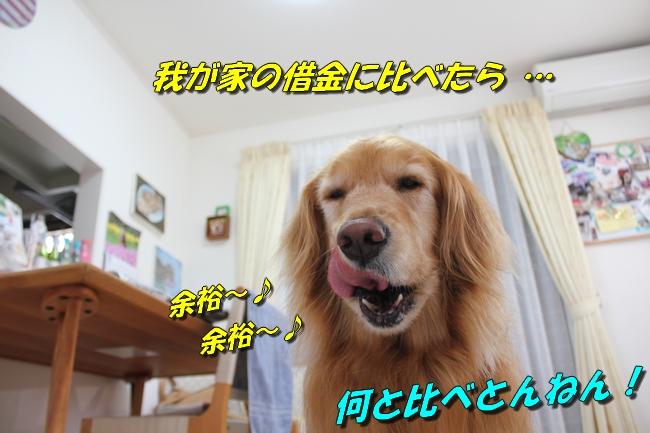 阪神新聞 027