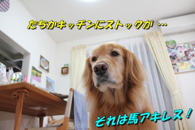 阪神新聞 029