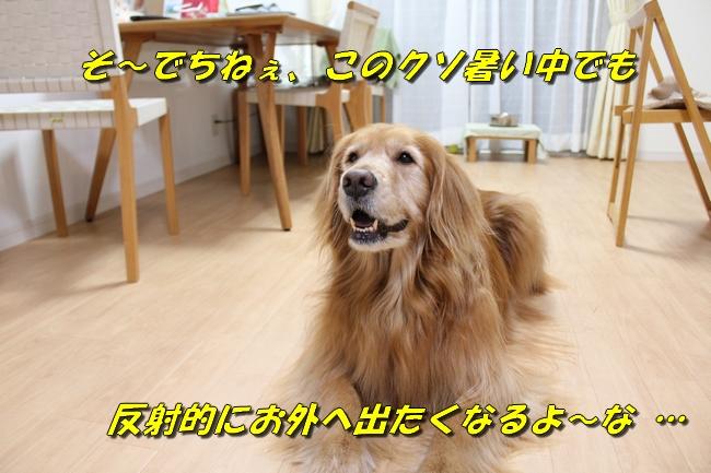TVPC表情 041
