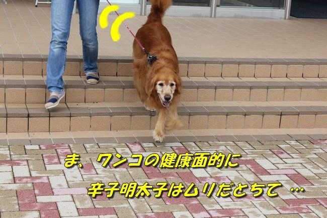 めんたいパーク 030