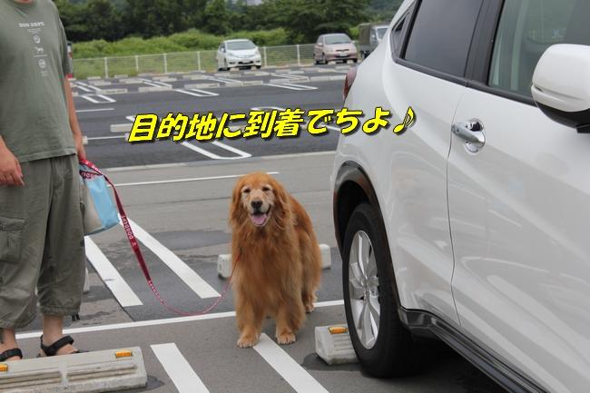 めんたいパーク 061