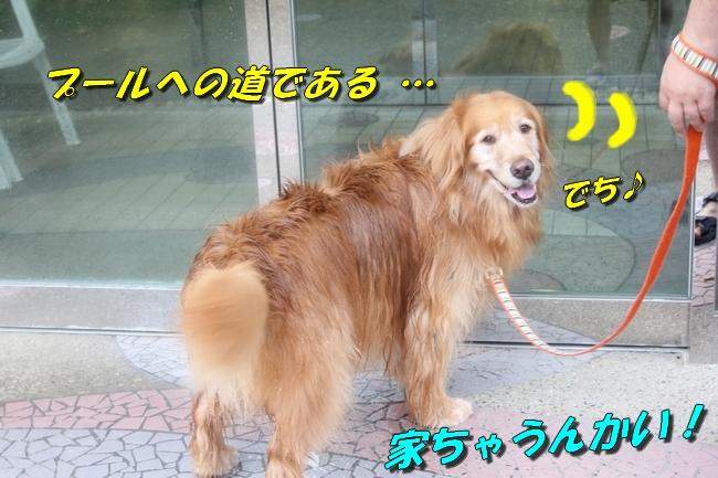 ティアナちゃんハスキー犬やくもちゃんつぶちゃん 002