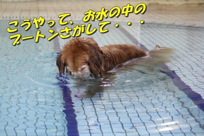 プールとジュリー 042