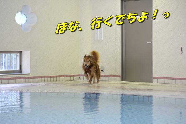 プールとジュリー 064