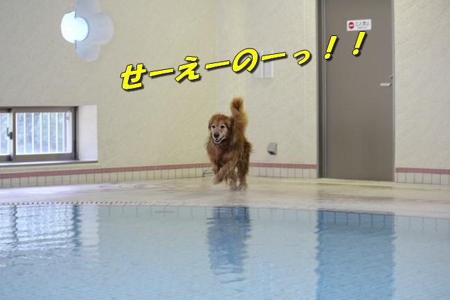 プールとジュリー 065