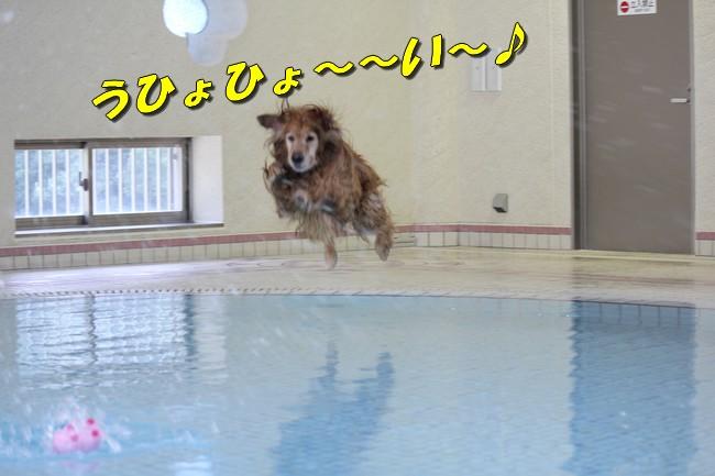 プールとジュリー 067