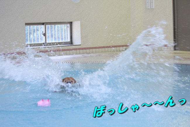 プールとジュリー 069