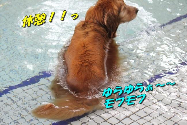 プールとジュリー 099