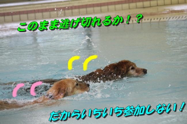 ティアナちゃんハスキー犬やくもちゃんつぶちゃん 347