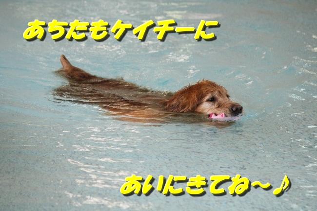 プールぶりイチロー 018
