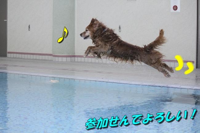 プールぶりイチロー 030