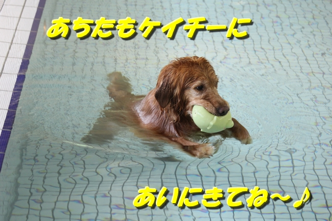 ティアナちゃんハスキー犬やくもちゃんつぶちゃん 486