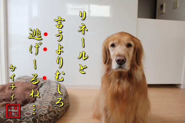 tv鑑賞 016