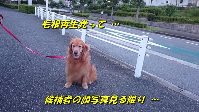 DSC_0290.jpg